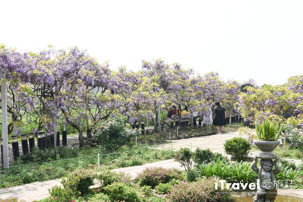 紫藤咖啡園 Damshui Wisteria (6)