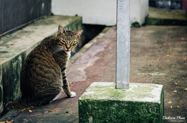 Cat Blur