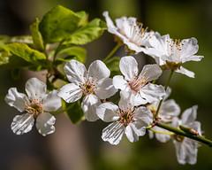 2021 printemps,fleurs
