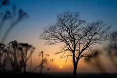 Sunshine  // Sonnenschein