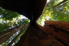 Under a giant