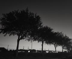 Dawn on SR 54