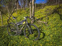 Vertigo Gravel Bike