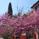 2021-04-04-130416 Città Giardino in fiore - https://www.flickr.com/people/9383990@N03/