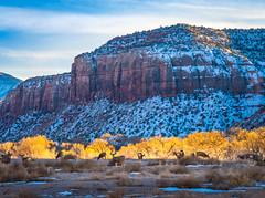 Canyonlands National Park South Side Deer! Master Medium Format Fine Art Photographer! Fujifilm GFX 100 Fujifilm FUJINON Lens