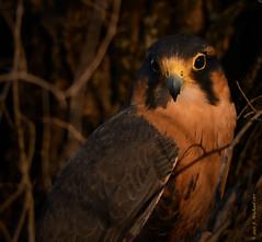 More Earthquest Birds of Prey