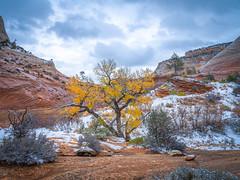 Zion National Park East Side Winter Snow Autumn Colors Fuji GFX100 Fine Art Utah Landscape  Nature Photography! Elliot McGucken Landscape Nature Photography! Master Medium Format Fine Art Photographer! Fujifilm GFX 100 & Fujifilm FUJINON Lens!