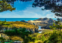 Point Lobos-1866