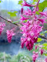 Long-awaited Spring