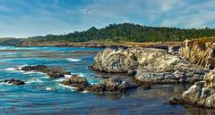 Point Lobos-1890