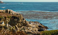 Point Lobos-1889