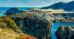 Point Lobos-1891