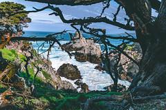 Coastline at Point Lobos