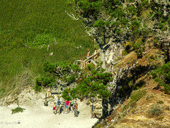 Point Lobos-1893