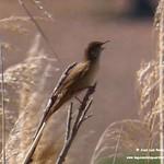 Aves en las lagunas de La Guardia (Toledo) 10-4-2021