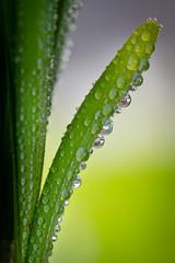 Raindrops  //  Regentropfen
