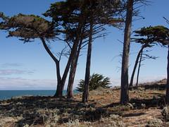 California coast at Monterey (2 years ago)