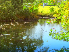 Pond and Meadow
