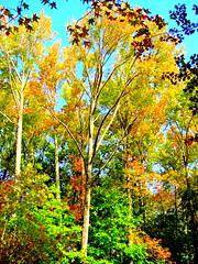Autumn Transiton