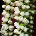 Jasmine Flower Garland @ Little India