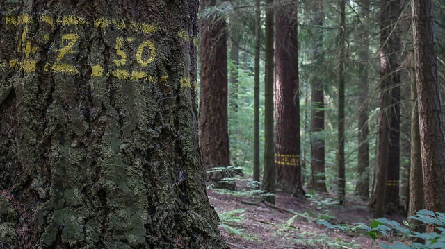 petr-vrestiak-web-5-of-24-3 • Forestis Slides