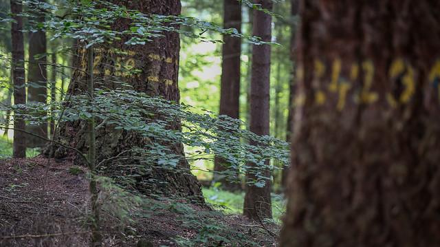 petr-vrestiak-web-3-of-24-2 • Forestis Slides