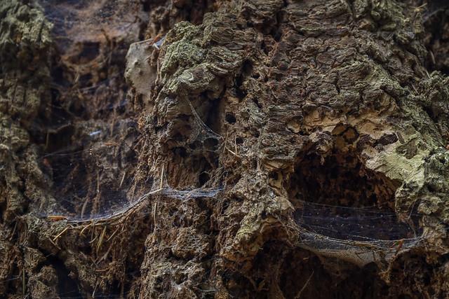 petr-vrestiak-web-17-of-24-3 • Forestis Slides