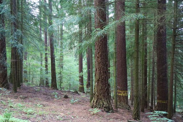 Douglasky-v-LMP2-4-1024x683-1 • Forestis Slides