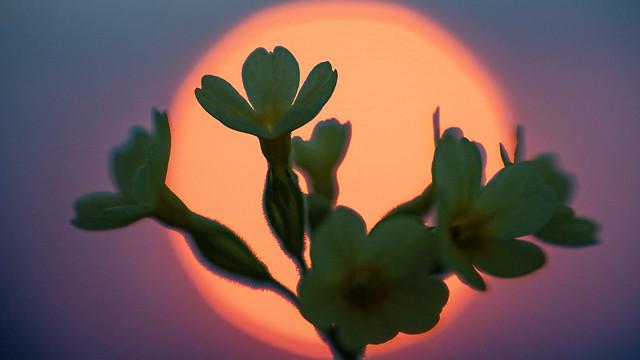 Hohe Kunst der Blumen-/Makrofotografie. Foto: Bernd Ritschel.