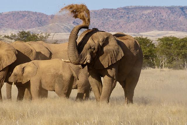 Namibia, im Etosha-Nationalpark.