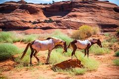 Monument Valley Wild Mustang Horses Fine Art Landscape Nature Photography Utah Cowboy Western Landscapes! 45EPIC Dr. Elliot McGucken Master Fine Art Wildlife Photographer!