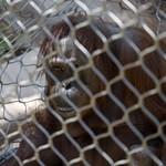LA Zoo April 2021 -450
