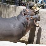 LA Zoo April 2021 -412