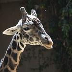 LA Zoo April 2021 -406