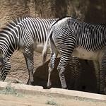 LA Zoo April 2021 -350