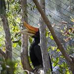 LA Zoo April 2021 -347