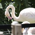 LA Zoo April 2021 -342
