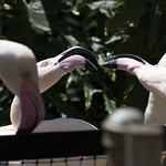 LA Zoo April 2021 -340