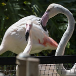 LA Zoo April 2021 -337