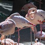 LA Zoo April 2021 -329