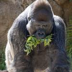 LA Zoo April 2021 -457