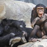 LA Zoo April 2021 -436