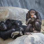 LA Zoo April 2021 -432