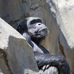 LA Zoo April 2021 -428
