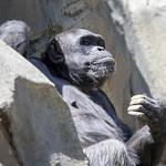 LA Zoo April 2021 -426