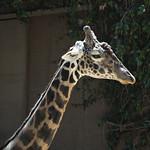 LA Zoo April 2021 -402