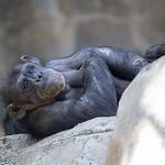 LA Zoo April 2021 -396