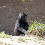 LA Zoo April 2021 -461