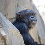 LA Zoo April 2021 -440