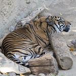 LA Zoo April 2021 -420